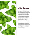 realistic fresh mint leaves banner vector image vector image