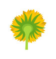 turning sunflower icon flat style vector image vector image