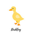 cute duckling isolated domestic duck kid or baby vector image vector image