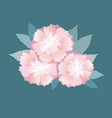 flowers isolated floral summer bouquet vector image