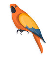 orange parrot icon cartoon style vector image