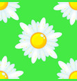 summer seamless pattern with chamomile flowers vector image