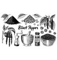 black pepper set in vintage style mortar and vector image vector image