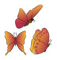 butterflies with orange wings beautiful vector image vector image