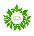 green herbal plant fresh stevia leaf mint foliage vector image