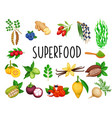 superfood fruit and leafy greens vector image vector image