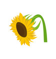 beautiful sunflower icon flat style vector image vector image