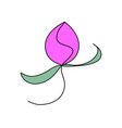 pink peony bud floral flower concept rose vector image