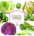 realistic cabbage frame vector image