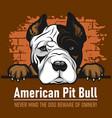 american pit bull - peeking dogs - breed face head