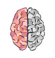 brain abstract tringles vector image