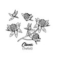 clover flowers black ink sketches set vector image