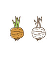 cute colorful and monochrome turnip icon vector image