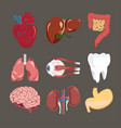 human organs set heart brain liver eyeball vector image