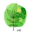 leaf ash tree vector image vector image