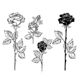 Set of Contour Roses vector image vector image