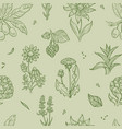 wild flowers and plants seamless pattern medical vector image