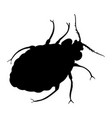 bed bug silhouette isolated on white background vector image vector image