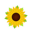 nice sunflower icon flat style vector image vector image