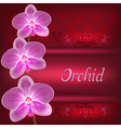 Greeting or invitation card with orchid flower vector image