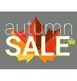 Autumn sale tag price or discount card Maple leaf vector image