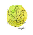 leaf of maple tree vector image vector image
