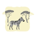 Zebra between savanna trees vector image vector image