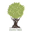 logo olive tree vector image