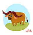cartoon of wild animal buffalo vector image
