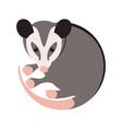 cartoon opossum flat style vector image vector image