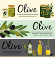 olive banners template olive organic products and vector image