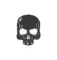Skull t-shirt graphics vector image vector image