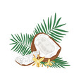 detailed botanical drawing cracked coconut vector image vector image