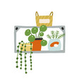 home potted plants on wall shelf decorative vector image vector image