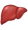 Liver of healthy person vector image vector image