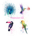watercolor birds set peacock parrot vector image vector image