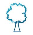 cartoon big tree vector image