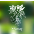 ginseng on blurred background vector image vector image