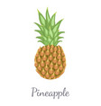 pineapple tropical plant edible multiple fruit vector image vector image