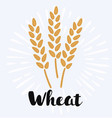 wheat and rye elements for design icon set vector image vector image