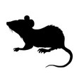 little house mouse vector image vector image