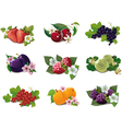 set of ripe fruits vector image vector image