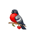 bullfinch bird on viburnum branch with red berries vector image
