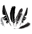 black feathers vector image vector image