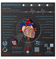 Heart And Blood System Medical Infographic vector image vector image