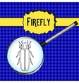 insect in magnifier Firefly beetle Lampyridae vector image vector image