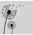 dandelion with transparent background vector image