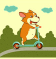 cute dog on kick scooter vector image vector image