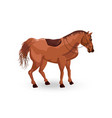 horse isolated detailed animal vector image vector image