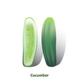 cucumber vector image vector image